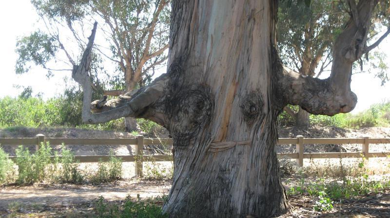 Tree Fuck 118