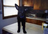 Logan as a pup!
